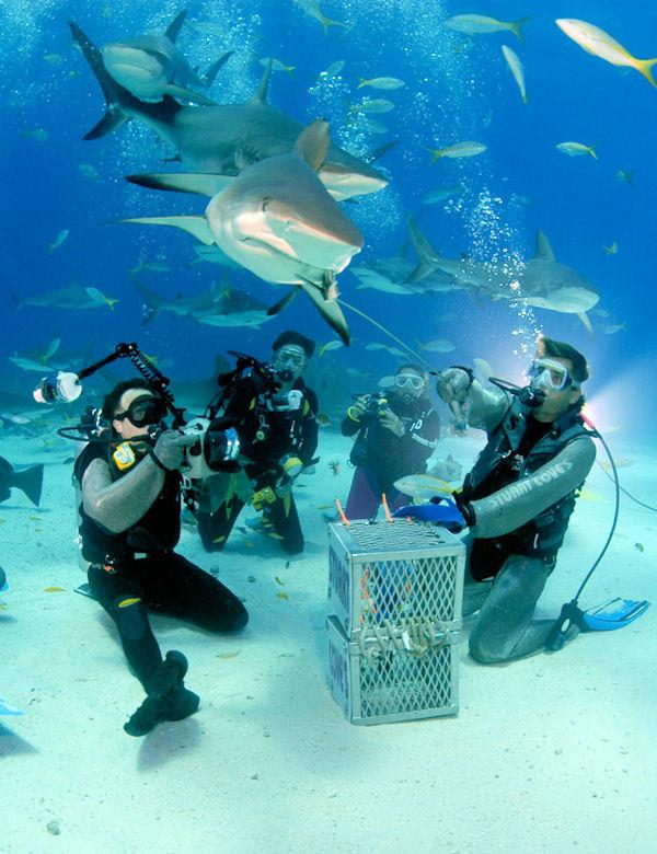Best Nassau 2 Tank Shark Adventure Shore Excursion At