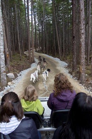 Skagway Sled Dog Discovery & Musher's Camp