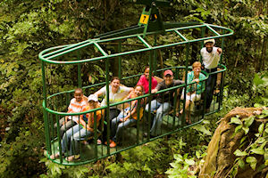 See the Rainforest from the safety of an Aerial Tram