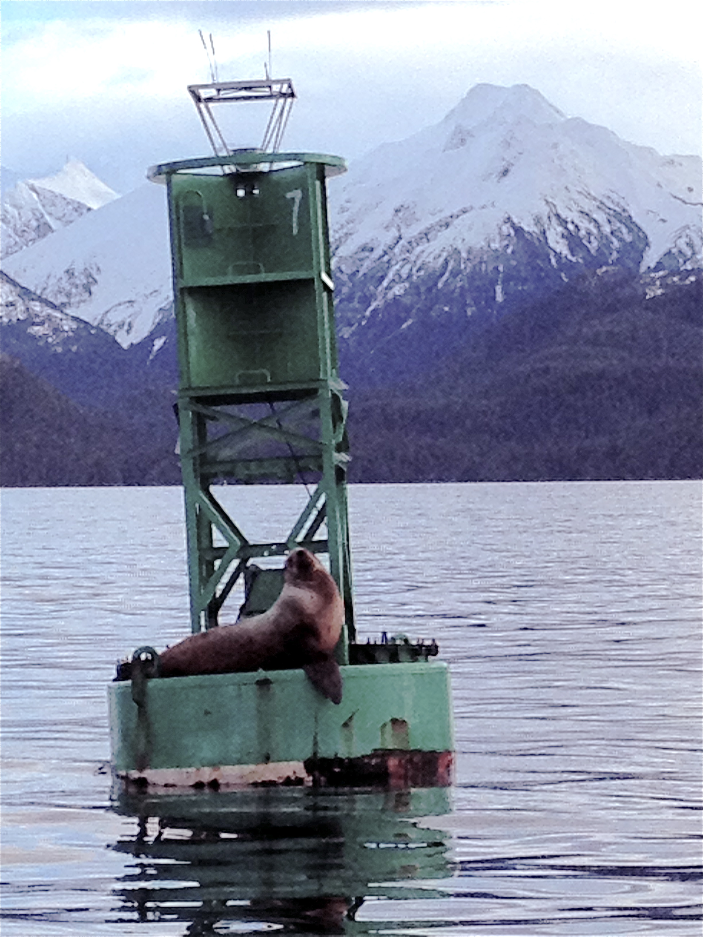 Sitka Marine and WIldlife Adventure