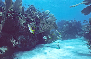 Bonaire Two Location Shore Snorkel