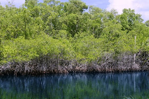 Everglades Tour with Transfer to Ft. Lauderdale Airport