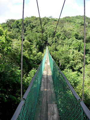 Hanging Bridges and Rainforest Skywalk
