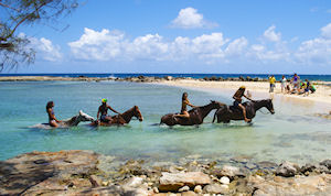 Montego Bay - Braco Estate Horseback