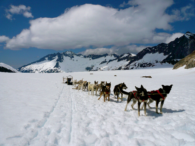 Helicopter Excursion Glacier Landing and Dog Sledding